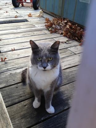 Gray Mama, December 2012