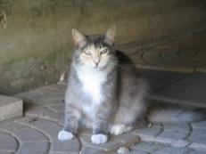 Polly4