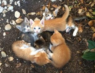 Rusty's Kittens