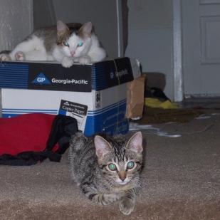 Mom Cat & Wallie, 2004