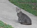 Gray Kitty, Univ, Oaks, June 24, 2010