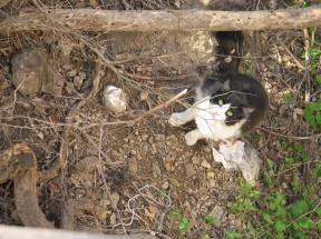 Sylvester, 2009