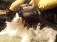 Sylvester, 2014