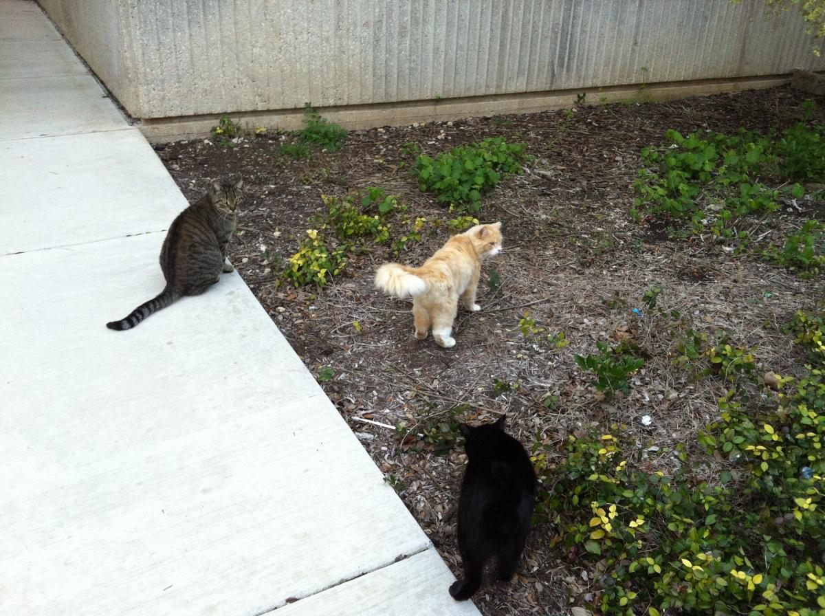 Tiger, Kelly, & Lucifer