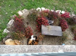 Tunnel Kitties