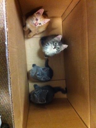 Grey Mama's Kittens, 2011