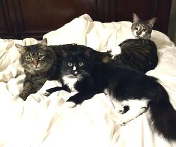 Stormy, Bailey, Emma