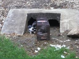 Gray Mama's kittens