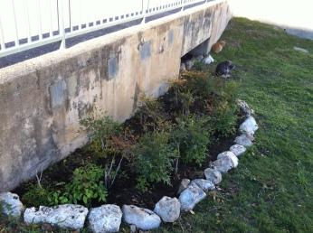 Plant bed, November 27, 2011