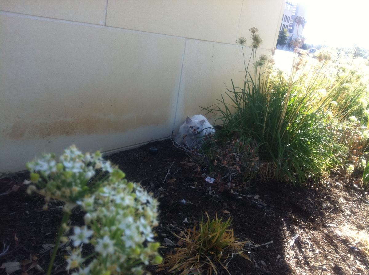 Snowball @ UC 3