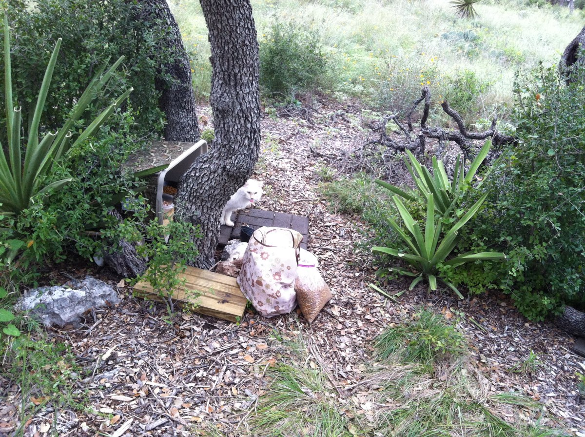 Snowball's feeding site