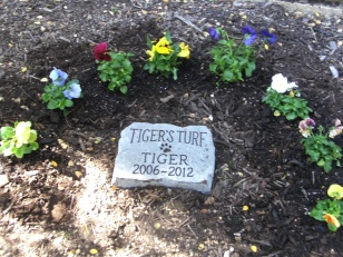 Tiger's Turf
