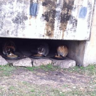 Tunnel1_2013_1230