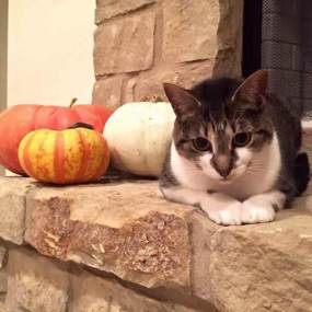 Emma by pumpkins