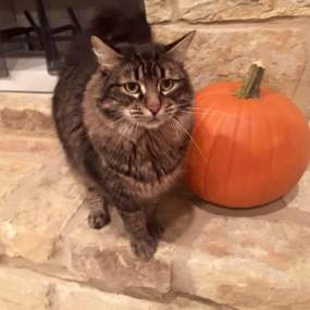 Stormy next to a pumpkin