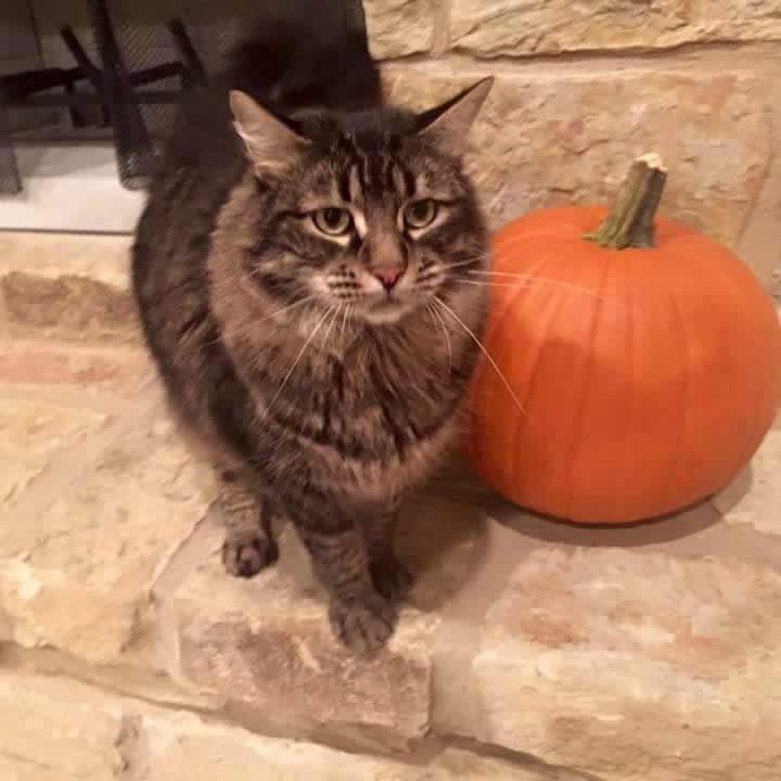 Stormy next to a pumpkin
