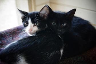 Kitten 1 & 2