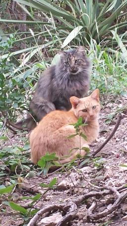 Sonny & Fluffy