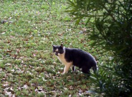 New Kitty @ PE