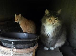 Pumpkin & Polly