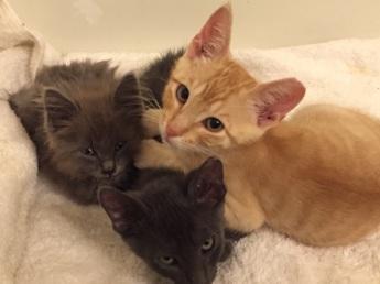 Dusty, Teddy, & Smokie