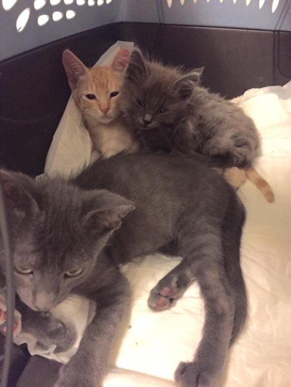 Dusty (Boo), Ted and Smokie (Wyatt)