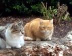 Rocky & Rusty