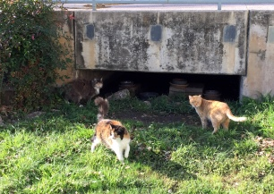 Tunnel Kitties