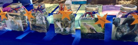 Donation Jars for Homecoming Kitty