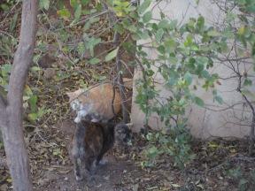 Chloe & Foxy