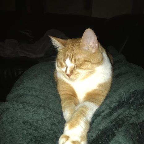 Oliver, December 2017
