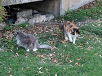 Polly & Speedy