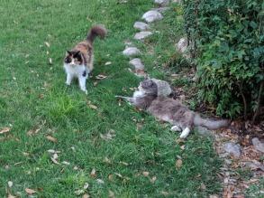 Speedy & Polly