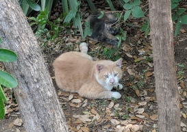 Foxy & Chloe