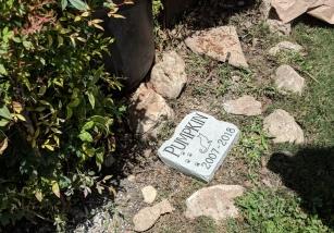 Pumpkin Memorial Stone