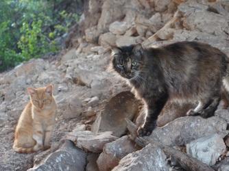 Fluffy & Sonny