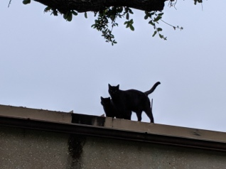 Lucifer and Sage on the roof, May 11, 2019