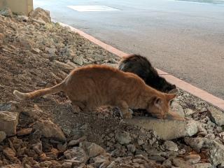 Sonny & Fluffy, having treats, January 4, 2020