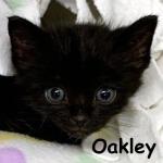 Oakley, December 2, 2019