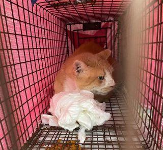 Foxy returning home after vet visit, April 27, 2020