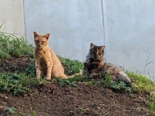 Sonny & Fluffy after Sonny's back home, April 26, 2020