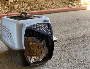 Sonny returning home after recuperating, April 26, 2020