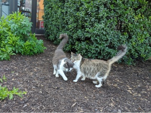 Charlie & Rocky, May 17, 2020