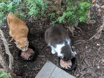 Rusty & Chalie having dinner, June 26, 2020