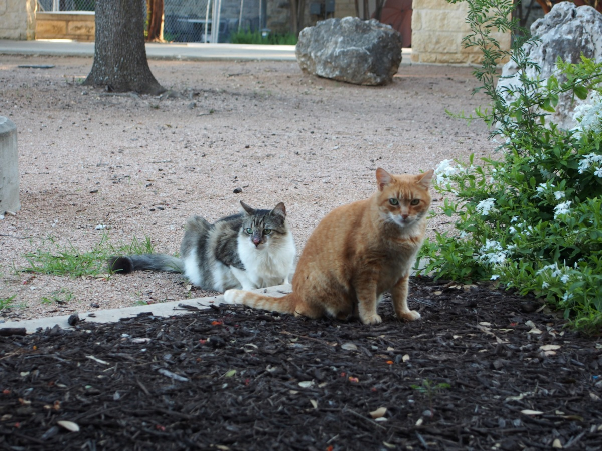 Rusty & Rocky, June 6, 2020