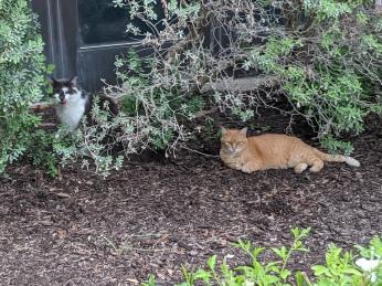 Charlie & Rusty, July 28, 2020