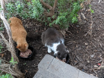 Rusty & Charlie having dinner, June 26, 2020