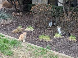Rusty, Rocky, Charlie, February 28, 2021