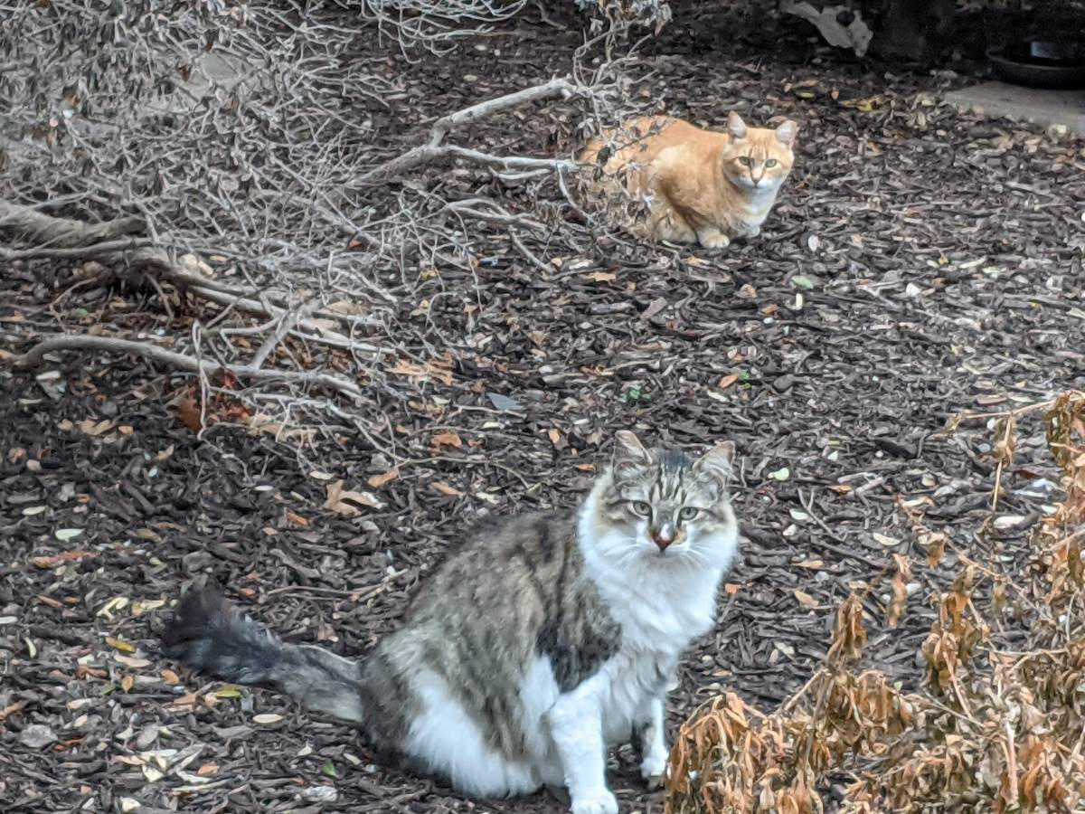 Rusty & Rocky, February 28, 2021