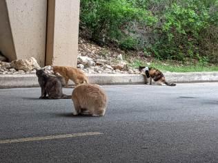 BB kitties, May 23, 2021